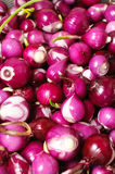 Red onion background Royalty Free Stock Photography