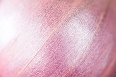 Red onion Background. Nature pattern and texture close up shot. Stock Image