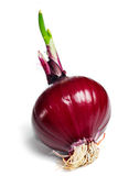 Red onion bulb isolated Stock Photo