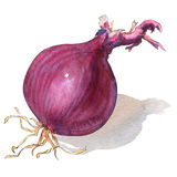 Red onion bulb isolated on white Stock Photo