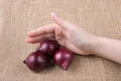 Red onion bulbs  in hand on canvas Stock Photography