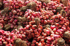 Red Onion Bundle On The Market. Closeup Of Large Stock Of Red Onion Bundle On The Market Stock Images