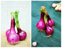 Red onion. Close up of fresh red onion on vintage burlap Royalty Free Stock Images