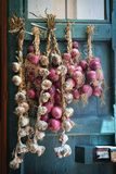 Red onion and garlic draped on old door Stock Photos