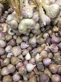 Red onion & Garlic Royalty Free Stock Image