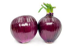 Red onion isolated on white background. 。 Royalty Free Stock Images