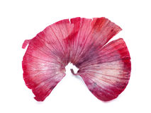 Red onion skin Stock Photography