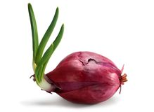 Red onion with spear Royalty Free Stock Photo