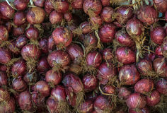 Red onion 2 Royalty Free Stock Images