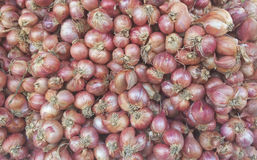 Red Onion. From Vegetables shop in market Royalty Free Stock Photo