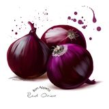 The red onion watercolor painting. White background Royalty Free Stock Image