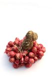Red onion. Red onion is on white background Royalty Free Stock Photos