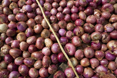 Red onions. Royalty Free Stock Photography