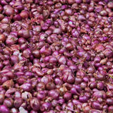 Red onions as a background Stock Images