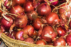Red onions in basket Stock Images