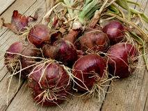 Red onions bunch Stock Images