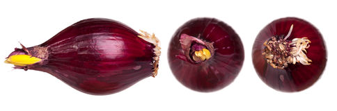 Red onions 3D Royalty Free Stock Images