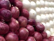 Red Onions Fade to White. Close up focus on red onions with shallow depth of field. Uniform repetition of the stacks of onions Royalty Free Stock Image