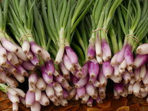 Red onions at Farmers market. Bunches of purple spring onions  with green stems at farmers market Stock Image