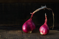 Red onions. Fresh red onions on wood Stock Photography