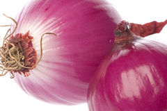 Red Onions Isolated Stock Photography