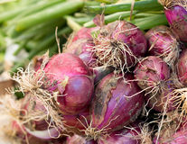 Red onions on a market Royalty Free Stock Image