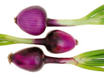 Red onions (purple onions) Royalty Free Stock Photo