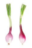 Red onions with stem, Tropea type on white Stock Photo