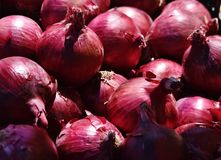 Red Onions in the Sun stock image