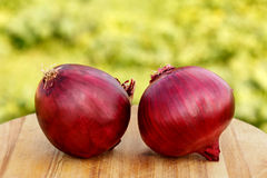 Red onions. Two red onions on wooden table-close up Stock Image