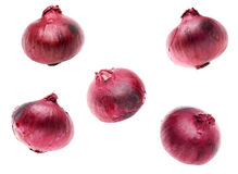Red onions on white background Stock Photos