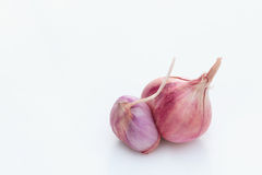 Red onions on white background. Red onions on white background copy space for write text Royalty Free Stock Image