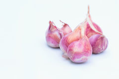 Red onions on white background. Red onions on white background copy space for write text Royalty Free Stock Images