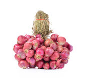 Red onions on white background Royalty Free Stock Image
