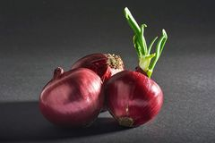 Red onions whole, isolated on a black background. Stock Photography