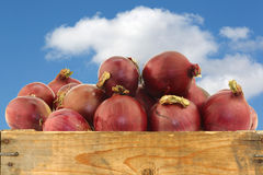 Red onions in a wooden crate Royalty Free Stock Photography