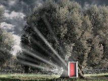 Red open door in the tree. Royalty Free Stock Photo