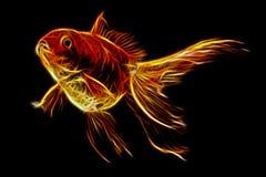 Red Oranda Goldfish Stock Photography