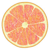 Red orange. Grapefruit texture on white,  suits for duplication of the background, illustration Royalty Free Stock Photos