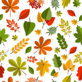 Red and Orange Autumn Leaves Background . Royalty Free Stock Photos