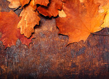 Red and Orange Autumn Leaves Background. Yellow Fallen autumn Royalty Free Stock Photos