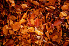 Red and Orange Autumn Leaves, color background. stock photo