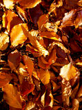 Red and Orange Autumn Leaves, color background. royalty free stock photography