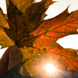 Red orange autumn leaves and sunlight Stock Image
