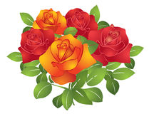 Red and orange beautiful vector flowers - roses Royalty Free Stock Photo