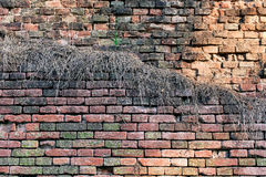 Red-orange brick wall overgrown with grass Royalty Free Stock Image