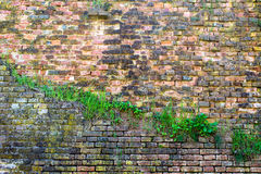 Red-orange brick wall overgrown with grass 5 Stock Photo