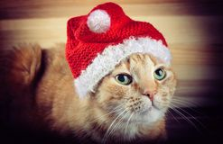 Red/orange cat in Santa Claus red hat on wood background - New Year/Christmas holiday photography Royalty Free Stock Photo