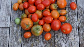 Red and orange cherry tomatoes on wooden background Stock Image
