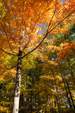 Red and orange fall foliage trees in Vermont Stock Image